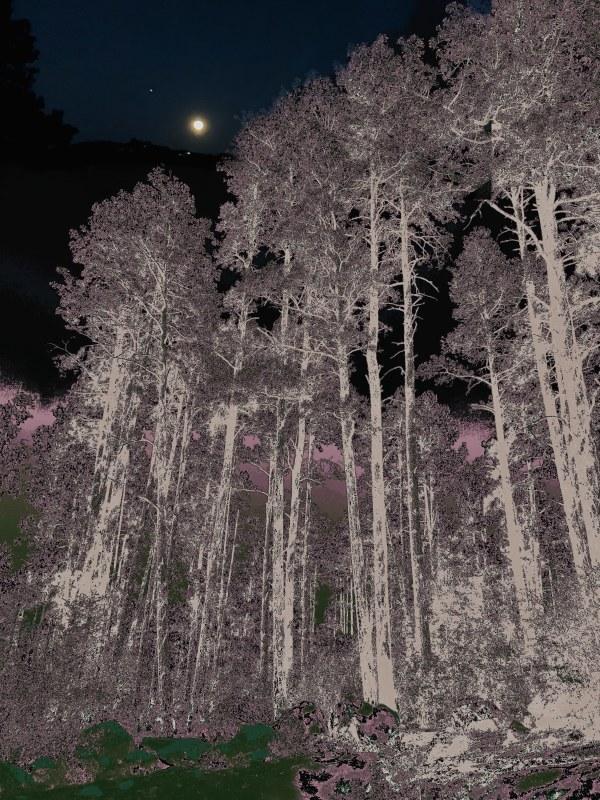 Moon Over Tree Tops by Debra Sutherland Core  Fine Art