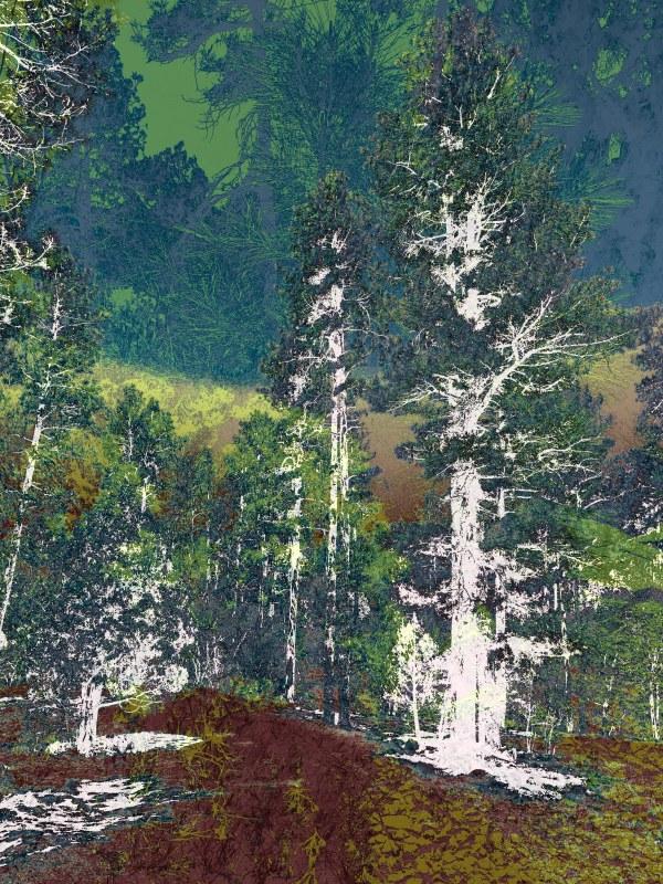 Walk in the Woods by Debra Sutherland Core  Fine Art