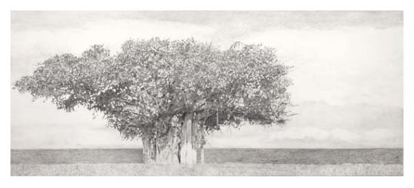 Banyan Tree, Magnetic Island, NSW, AU by Carol Rowan