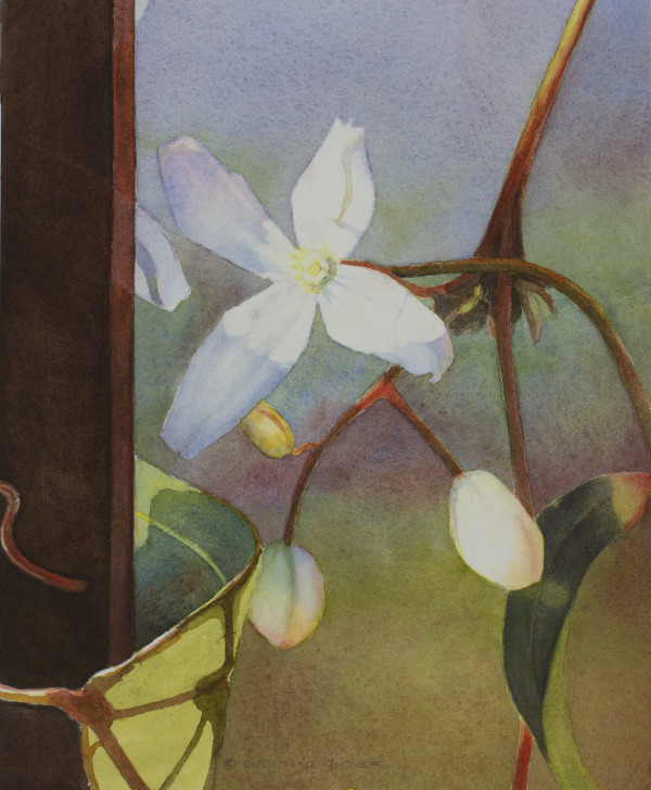 Evergreen Clematis III by Judith Glover
