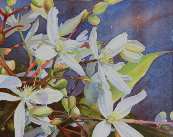 Evergreen Clematis II by Judith Glover