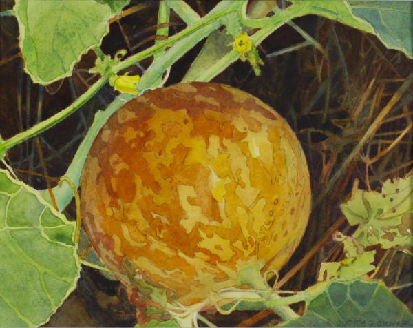 Pocket Melon by Judith Glover