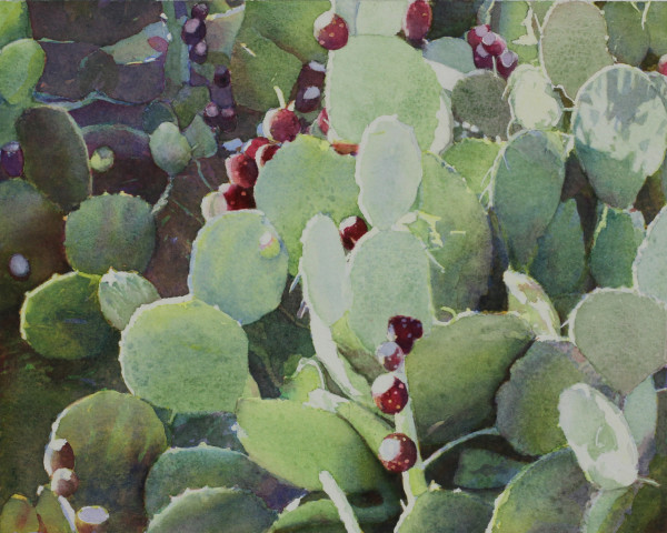 Prickly Pear Cactus by Judith Glover