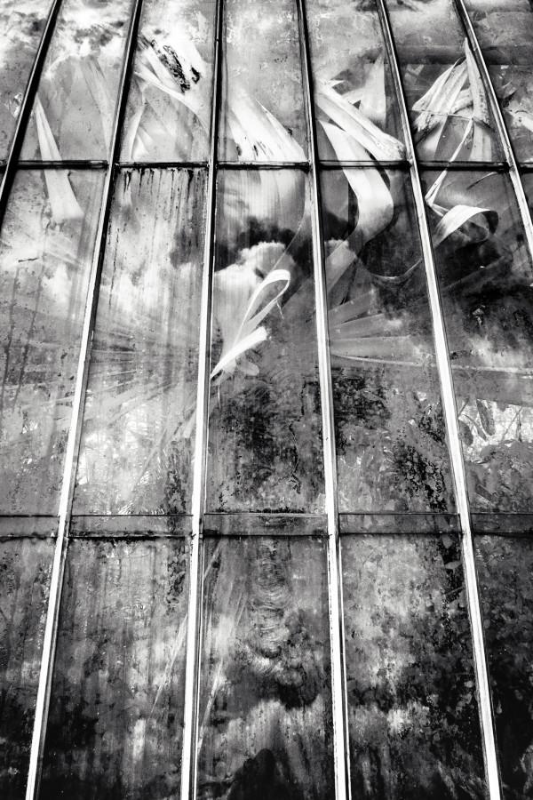 Between Worlds: Palmhouse Dance by Bernard C. Meyers