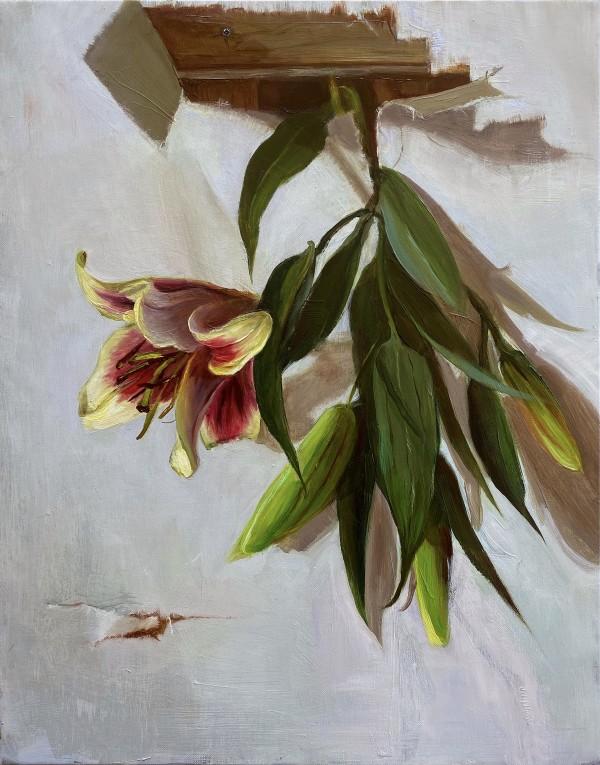 Lily liberte by Deana Evstefeeva