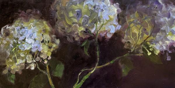 Hydrangeas by Deana Evstefeeva