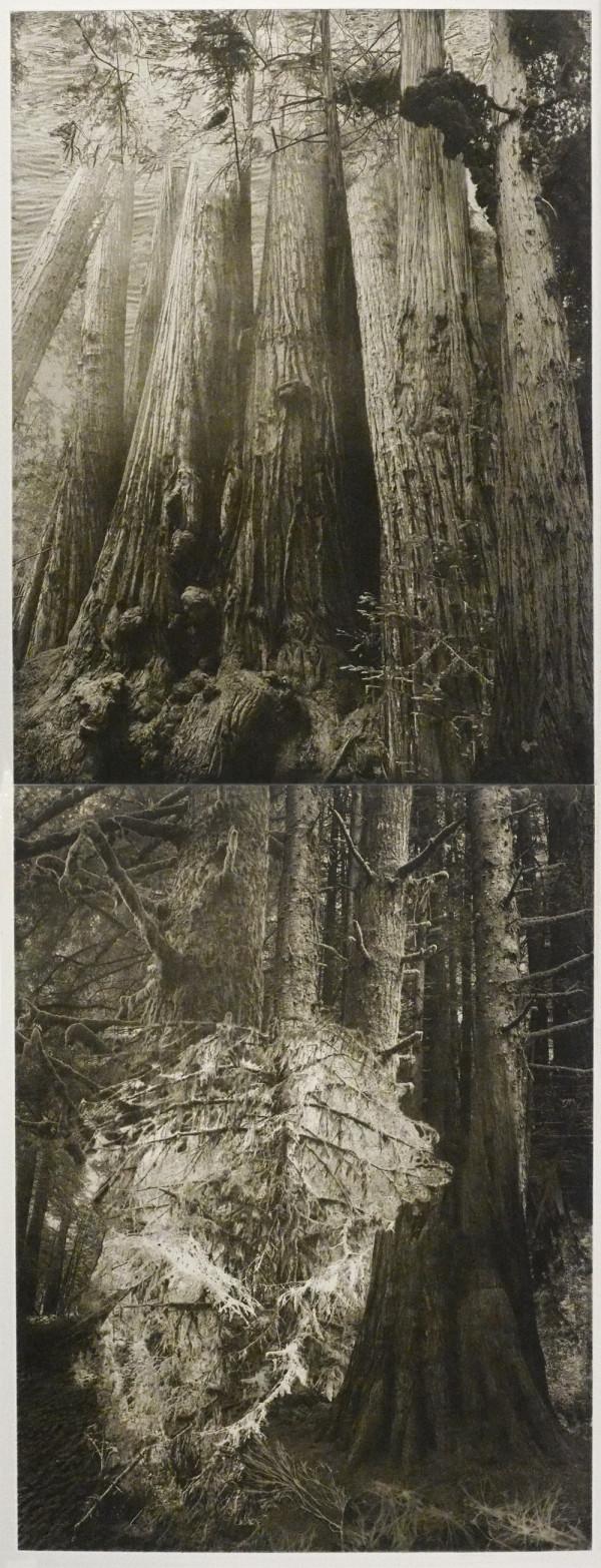 Tall Trees, Wild Trees by Lynda Frese