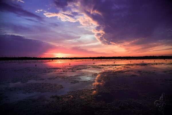 Crawfish Pond Sunset by Bach Prados