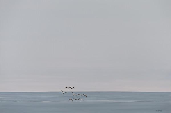 Freedom by F. Lipari