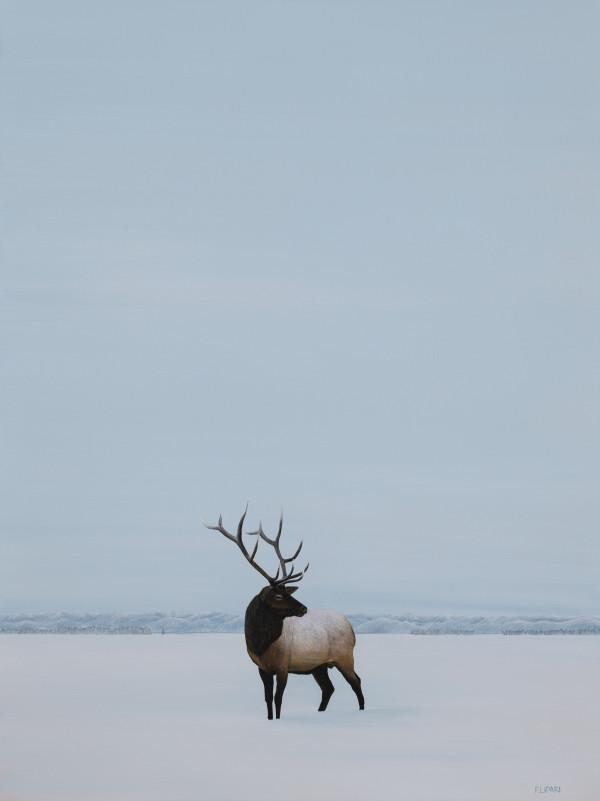 Elk by F. Lipari