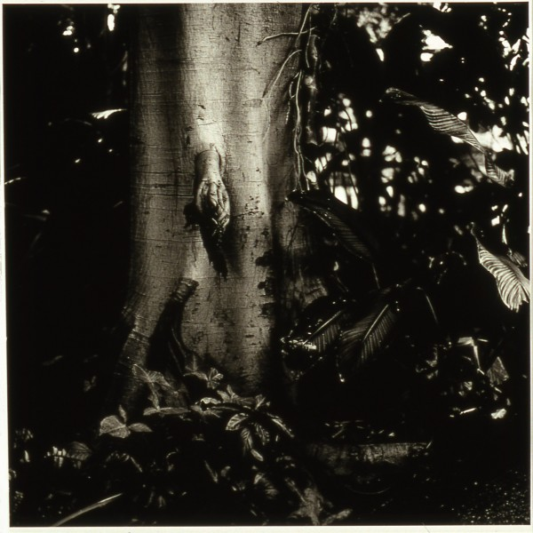 Untitled #18, from the Divide and Conquer series, 1999 by Dana Fritz