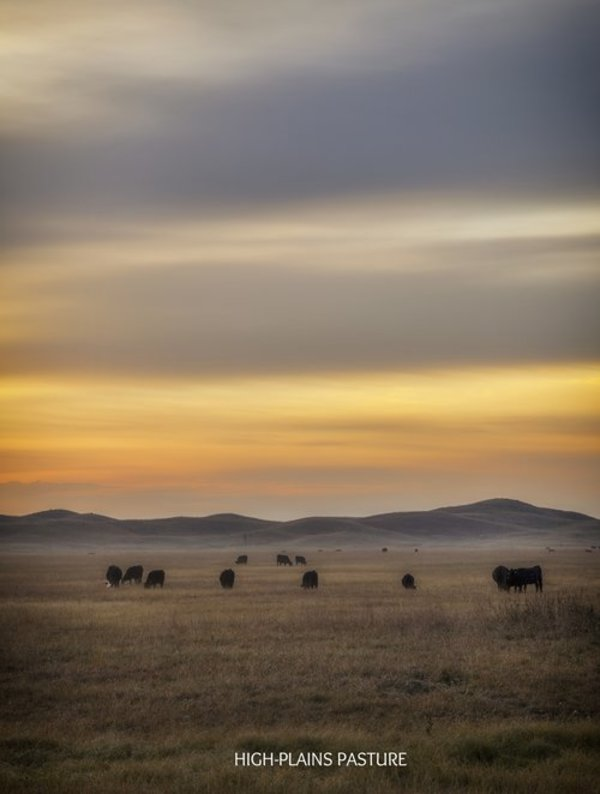 Sunset over Field with Cows by Terry  Koopman