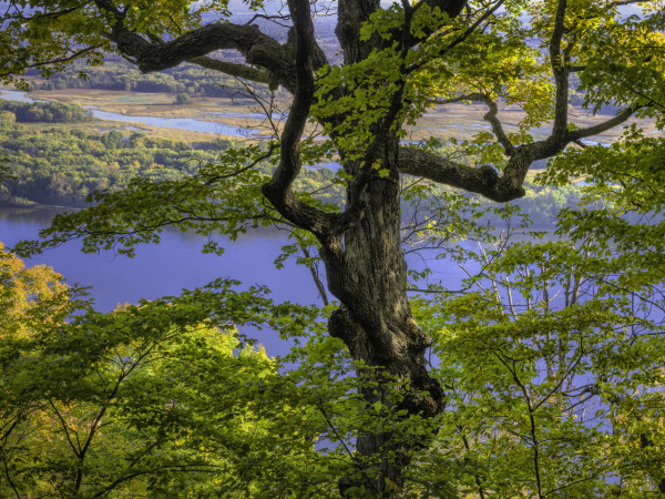 Tree with a View II by Jorn  Olsen