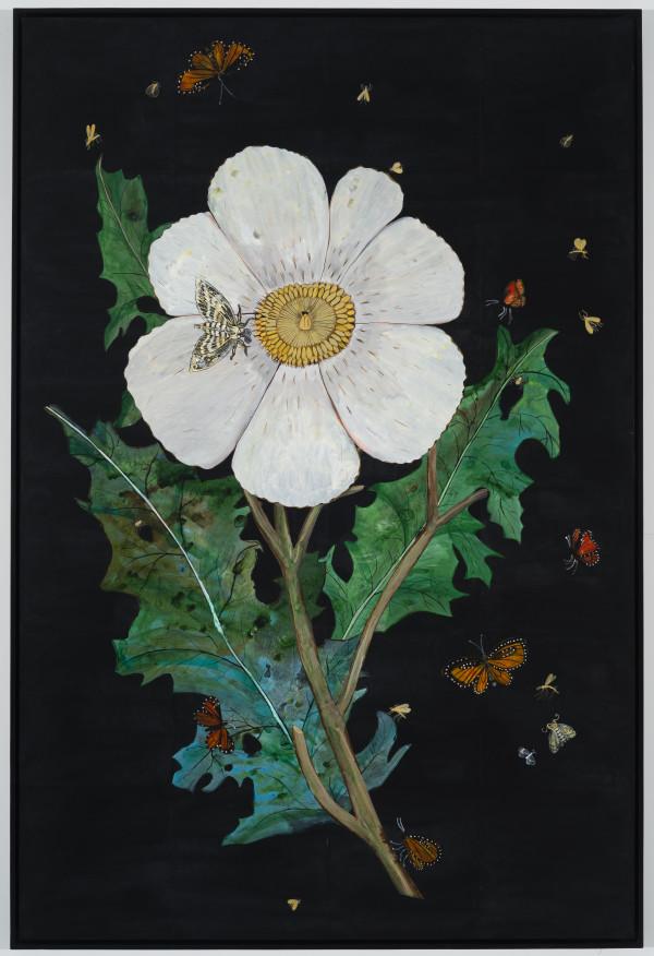 White Prickly Poppy, Monarch Butterfly by Nancy Friedemann-Sánchez