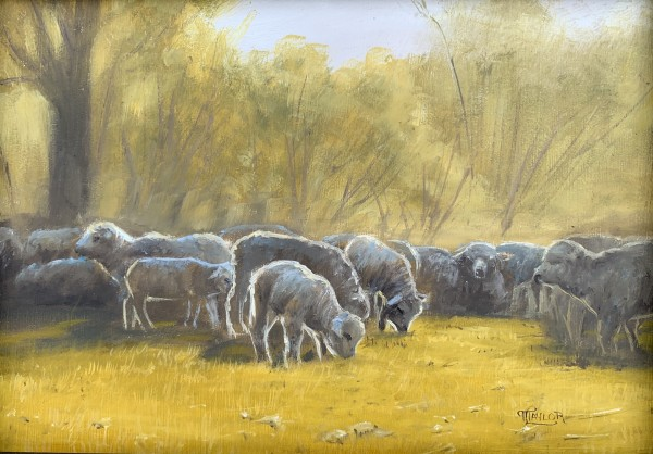Grazing at Sunrise by Tammy Taylor