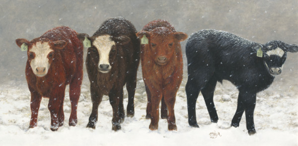Inquisitive Calves by Tammy Taylor