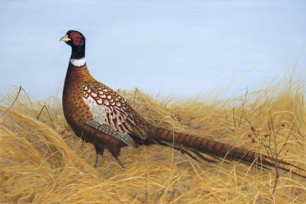 Prairie Splendour by Tammy Taylor