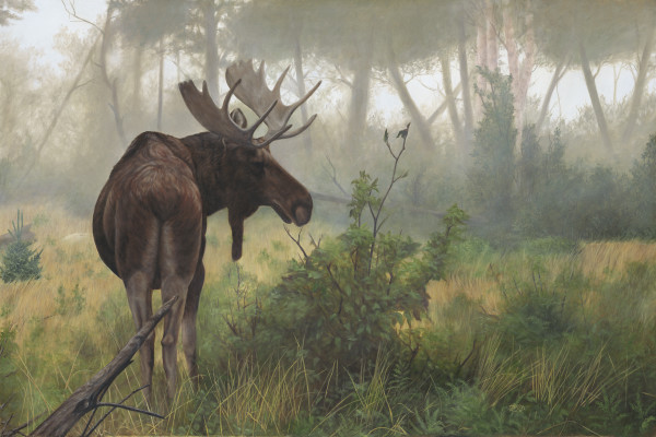 Early Morning Mist by Tammy Taylor