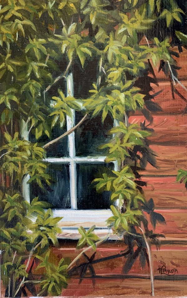 The Window by Tammy Taylor