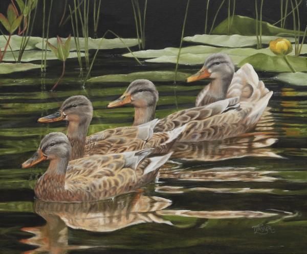 Got My Ducks In A Row by Tammy Taylor