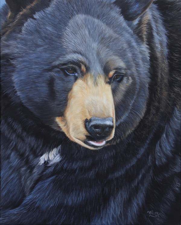 Bear Gaze by Tammy Taylor