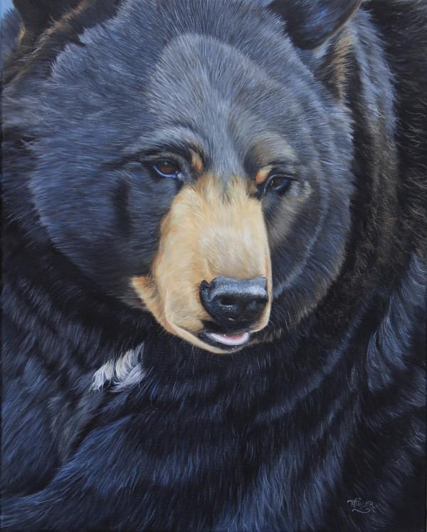 Bear Gaze by Tammy Taylor