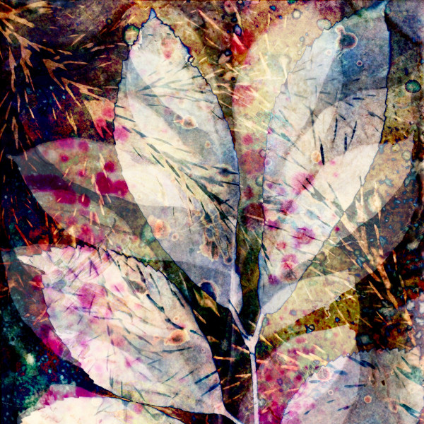 Candescence by Lesley Riley