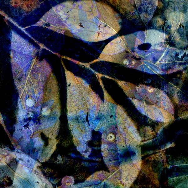 Purple Rain 1 by Lesley Riley