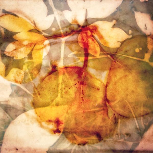 Eucalyptus by Lesley Riley