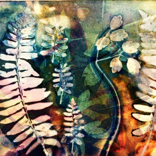 A Riot of Ferns by Lesley Riley
