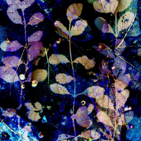 Purple Rain 2 by Lesley Riley