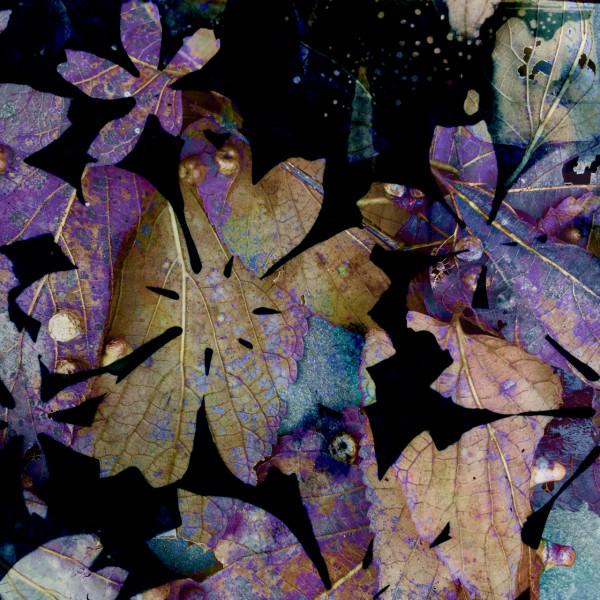 Purple Rain 3 by Lesley Riley