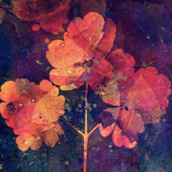 Love Bloom by Lesley Riley