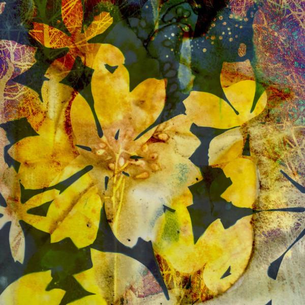 Sunshine 1 by Lesley Riley