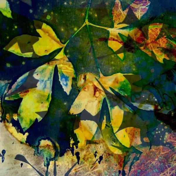 Sunshine 4 by Lesley Riley