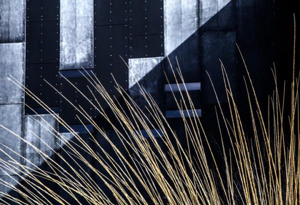 """2nd Place – Brigitte Wiltzer - """"Dear Grass"""" - https://inplainsightphotography.carbonmade.com by Brigitte Wiltzer"""
