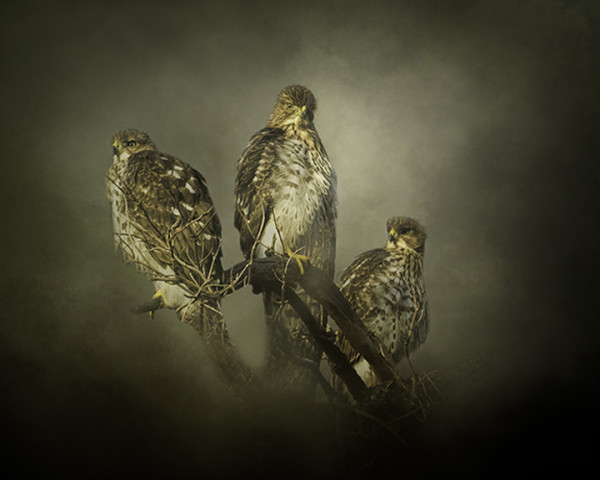 """2nd Place - Nicole Wilde - """"The Lookouts"""" - www.photomagicalart.com by Nicole Wilde"""