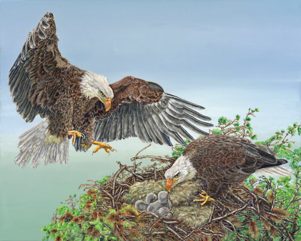 """4th Place - Dr. Ann Lindahl - """" Quadriptych Panel 4 - Mating Ritual 4 - Later, Eaglets in Nest"""" - https://squareup.com/store/ann-lindahl-studio by Ann Lindahl"""