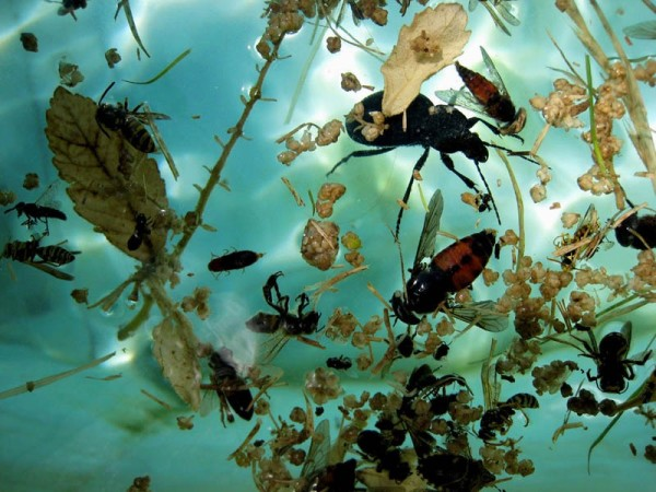 Ephesus Bugs in Water by Tina Psoinos