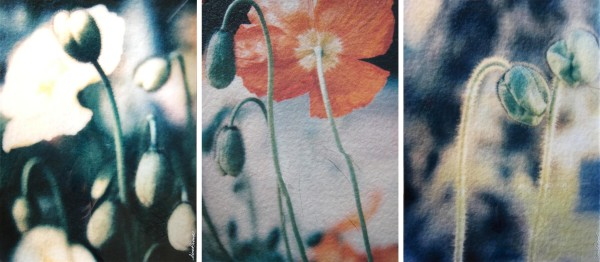 Poppies  White Red Green by Tina Psoinos