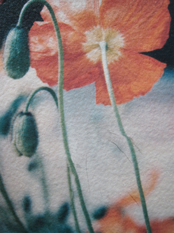 Poppies  Red by Tina Psoinos