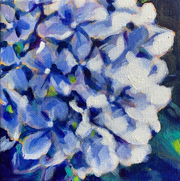 Hydrangea series: Blue by Marcia Hoeck