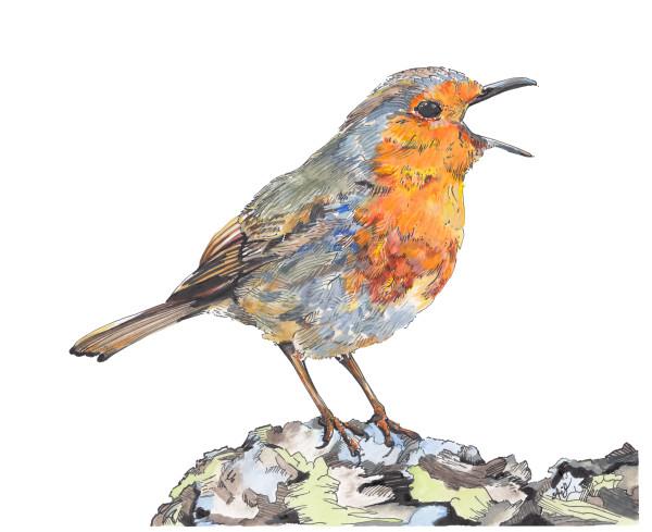 Singing Robin by Anna Iris Graham