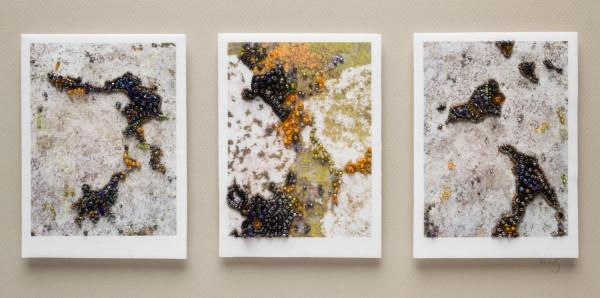 Triptych: Lichen by Kathy Mitchell-Garton