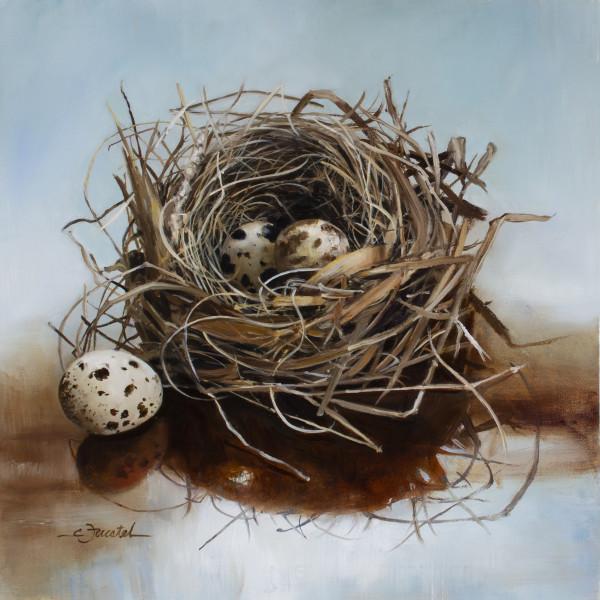 Nest with Quail Eggs by Cynthia Feustel