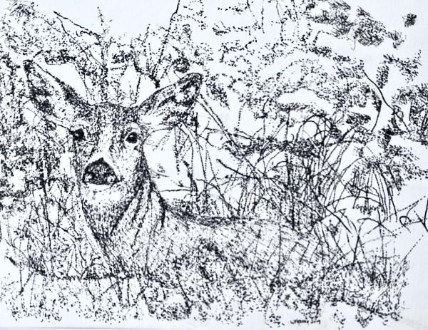 Deer in the Woods by Wanda Fraser