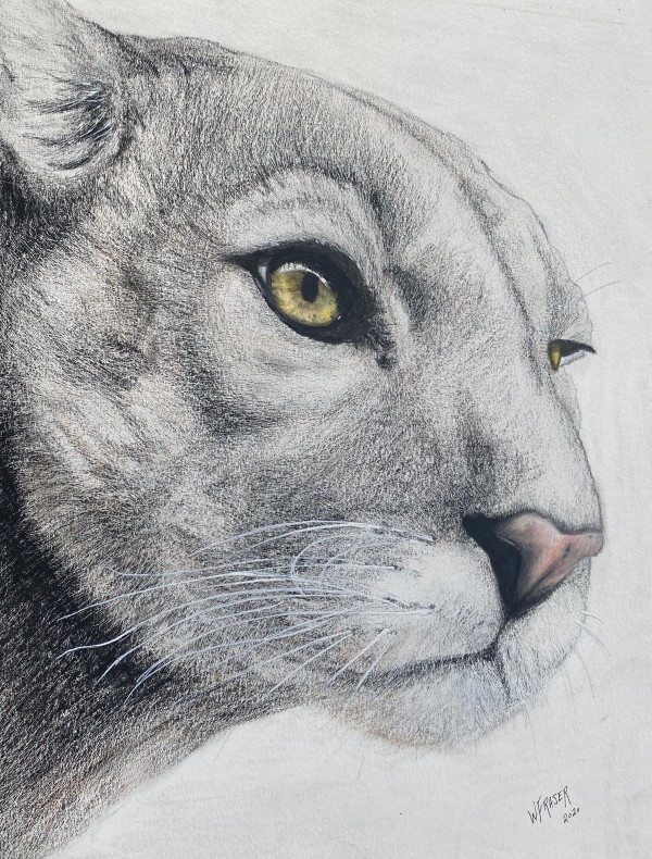 The Watcher II - Cougar by Wanda Fraser