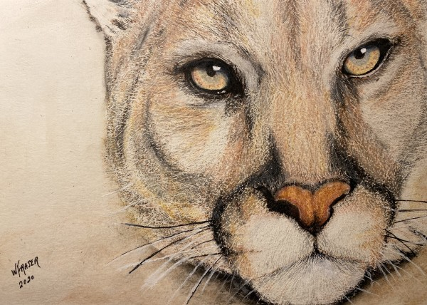 The Watcher - Cougar by Wanda Fraser