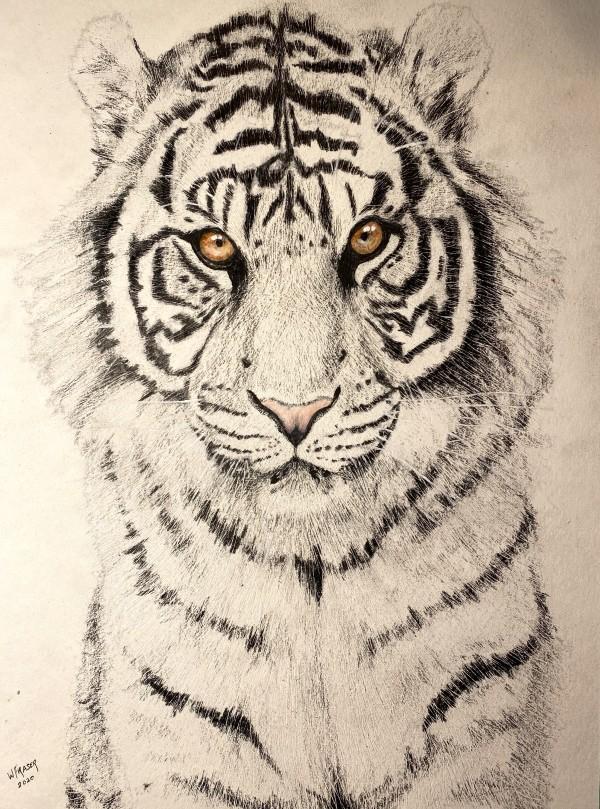 White Tiger by Wanda Fraser
