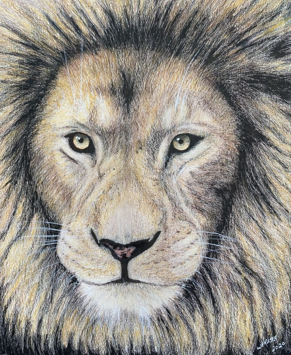 Lion by Wanda Fraser